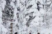 Raquette à neige Ariège groupe Forêts Bonascre